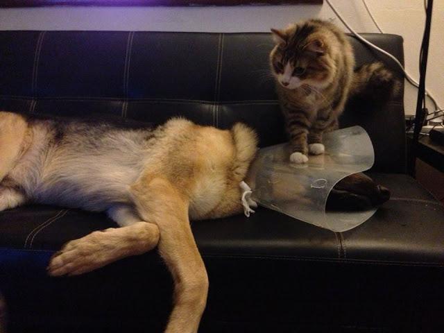 wrongonsomanyleverlsdog~cat